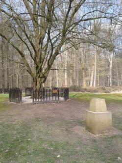 Delville Wood Last Tree