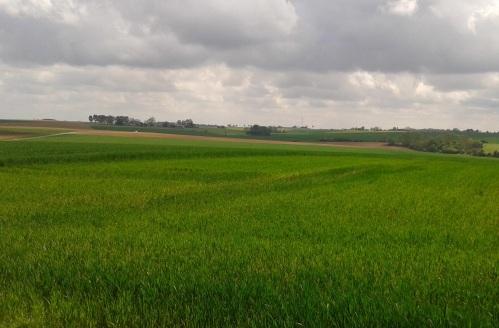 Pozieres & Mouquet Farm.jpg